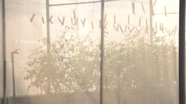 Skleník se sítí pro rostlinné školky ekologické zemědělství