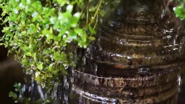 Vízcseppeket cascade zöld levelek