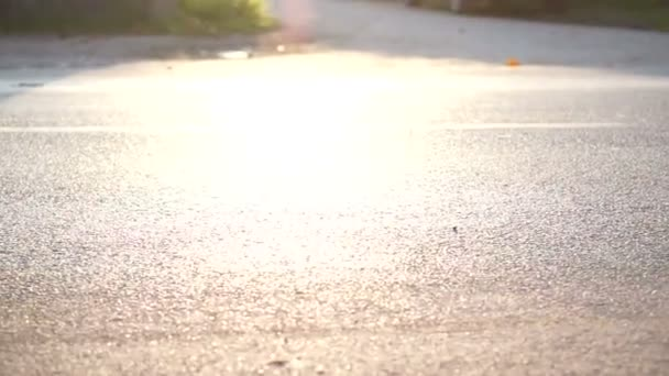 Marathon runners in the morning sun