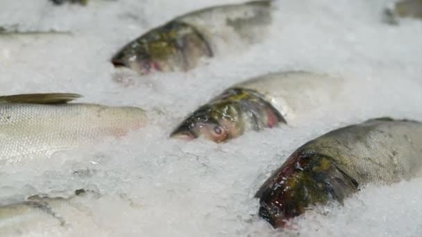 odrůda čerstvých ryb na trhu na ledě