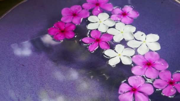 Video růžové květy v misce vody shora Prohlédni. Lázně dekorace