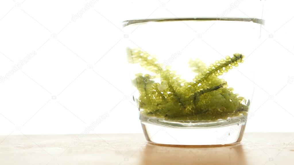 Sea grape seaweed, uni budou. japanese ocean seaweed food. great
