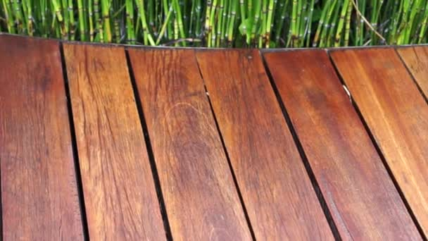 Video of wooden plank seat texture and green plant on the back, abstract modern architecture decoration and design