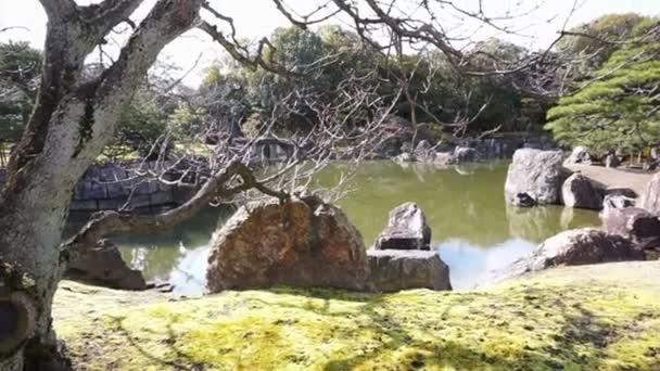 Video ze slavných zen zahrada, borovice a rybník v Kjótu, Japonsko