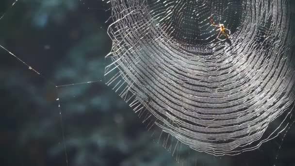 Pavouk na webu v lese sluníčko. Abstraktní past a nebezpečí