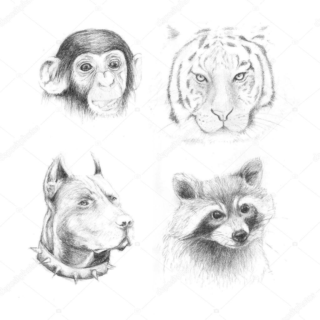 Images Animals Pencil Drawing Set Pencil Drawing Animals
