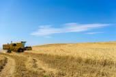 kombajn na pšeničné pole s modrou oblohou