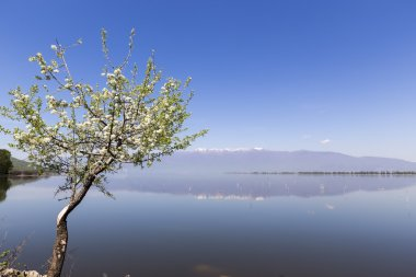 Kerkini lake and mountain eco-area at north Greece by Struma riv
