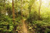 Sentiero escursionistico attraverso foresta verde lussureggiante