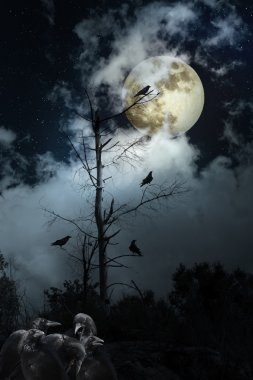 Crows night
