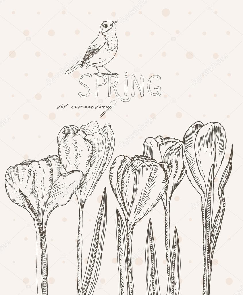 Spring flowers. Crocus.