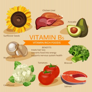 Vitamins and Minerals foods Illustration. Vector set of vitamin rich foods. Vitamin B5. Broccoli, chicken liver, avocado, sunflower seeds, cauliflower, tomatoes, mushrooms, salmon