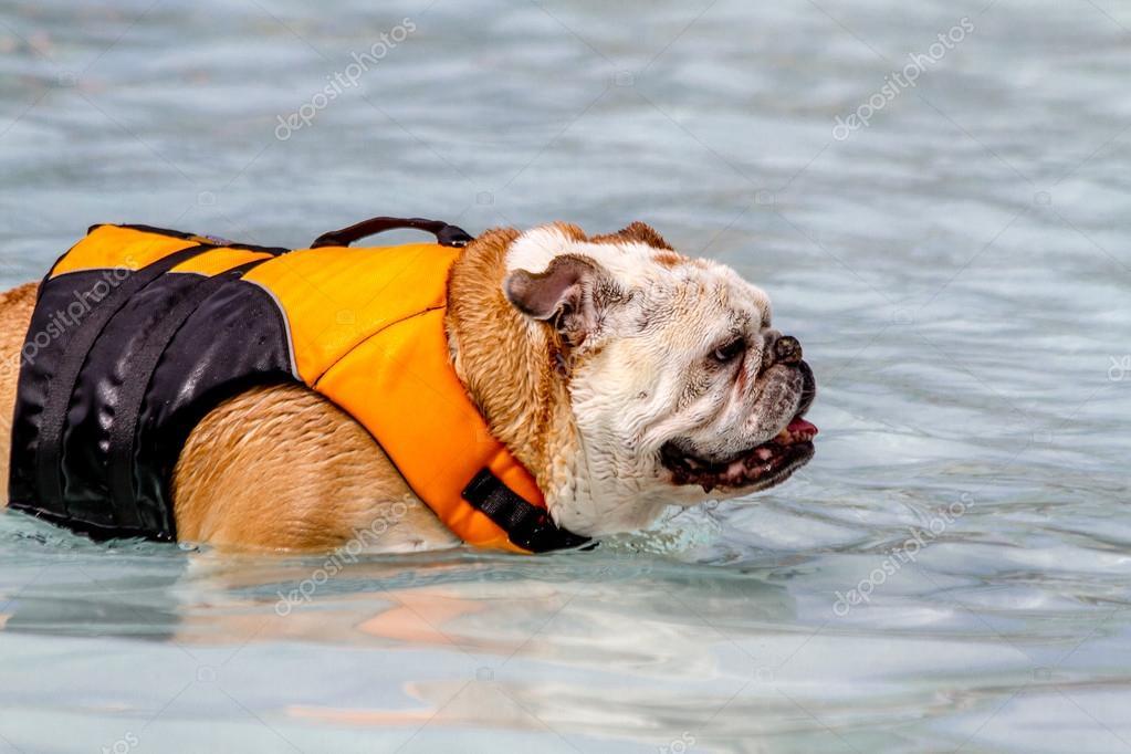 Hunde Im Schwimmbad