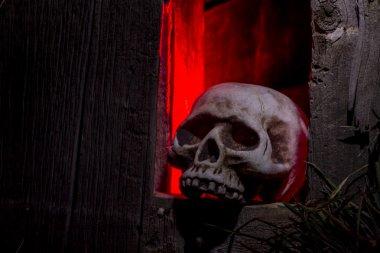 Halloween Skulls and Decorations
