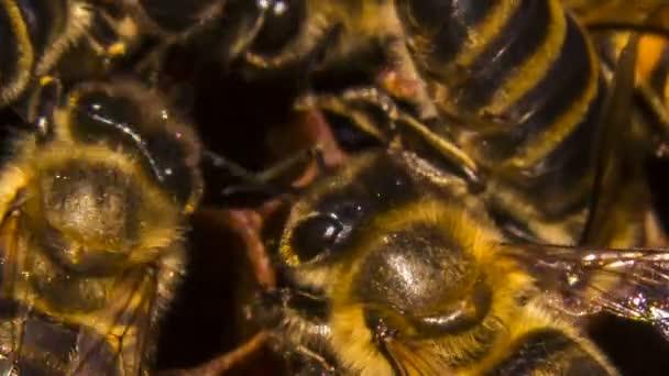včely na plástve