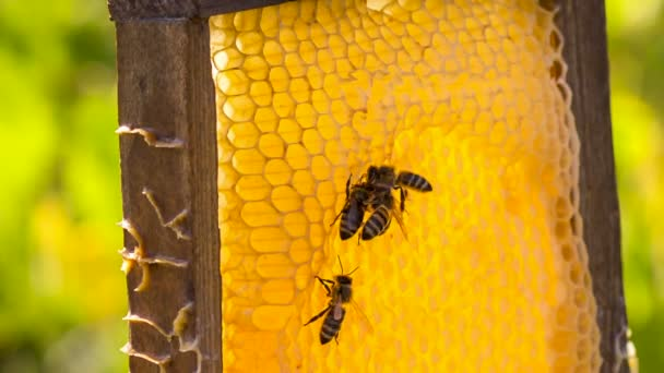 Bienen fressen Honig auf Waben