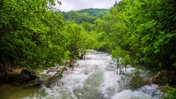Rapid Mountain River Flowing In Fresh Green Forest