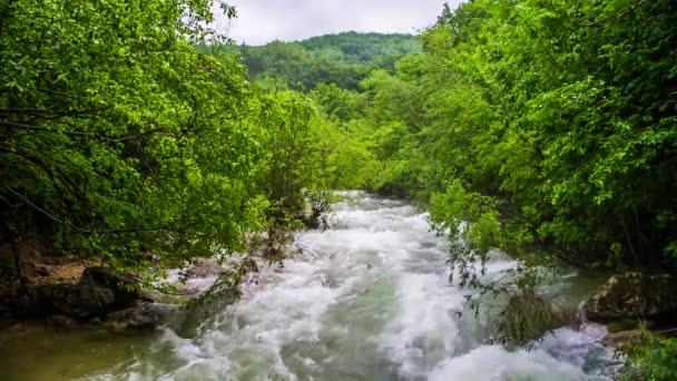 Svižný horský říční tok v čerstvém zeleném lese