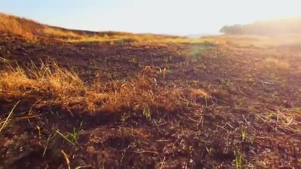 Burnt Grass Damaged By Fire At Scythian Naples, Crimea