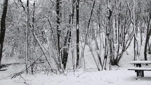 mrazivý Zimní krajina v zasněženém lese