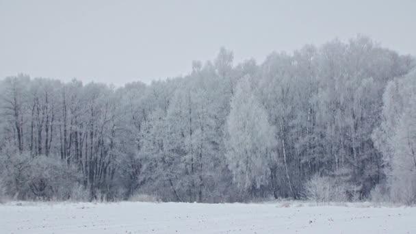 Tajemný zasněžený les mrazivý Zimní krajina