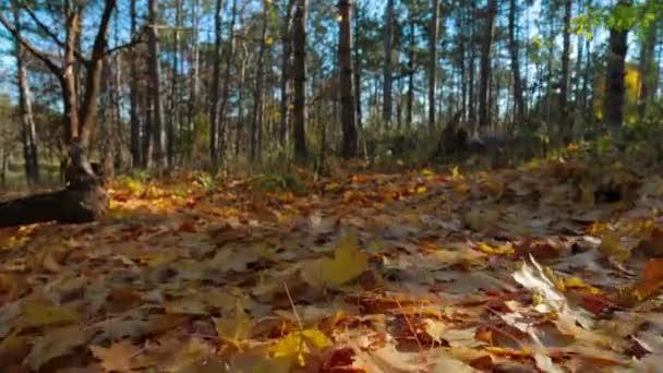 Sárga lombozat a földön az őszi parkban