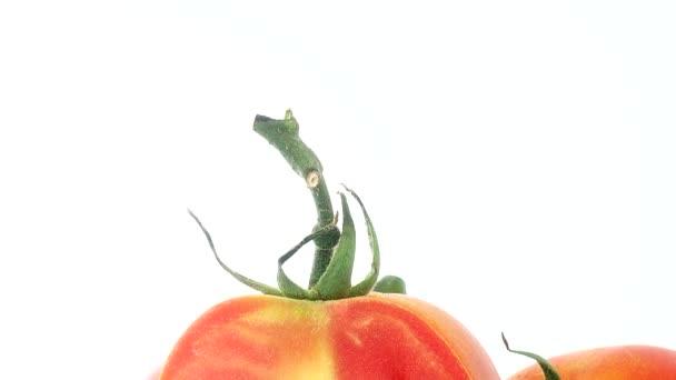 4K Hromada čerstvých zralých organických rajčat v pytli na otáčivém talíři izolovaném na bílém pozadí