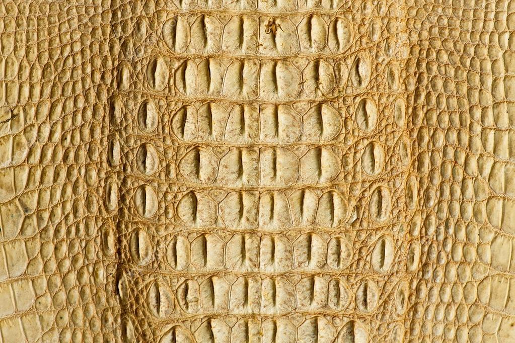f2d5778df Textura de pele de crocodilo dourado — Stock Photo © Mongpro #96667010