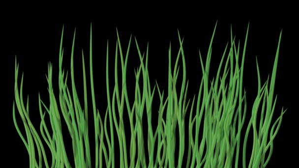 Waving water grass generated seamless loop video with alpha matte