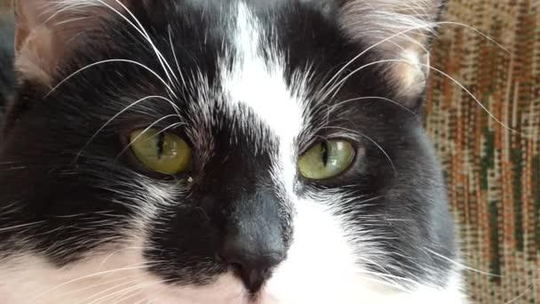 Macskaszemek