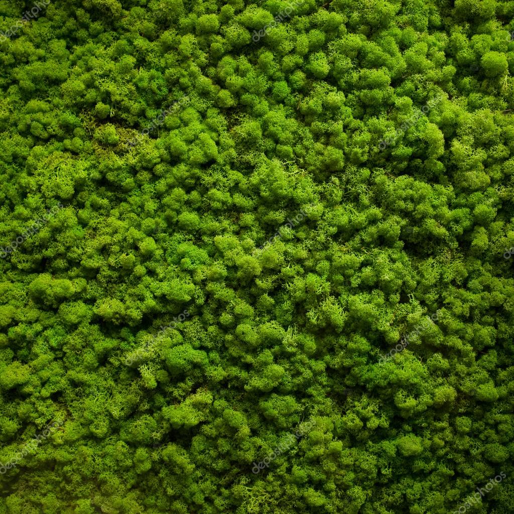 Mossy Green Moss Texture Stock Photo 169 Alexzaitsev 78697546