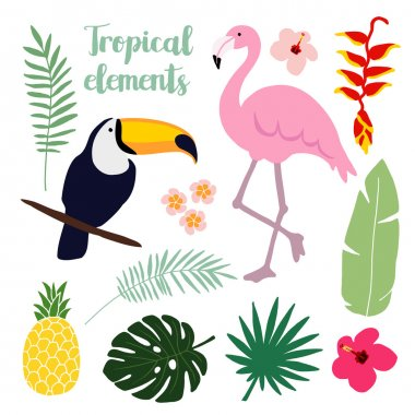Summer tropical elements. Toucan and flamingo bird. Jungle floral illustrations, palm leaves, vectors