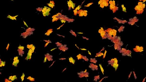 Flying colorful maple leaves. Autumn, fall background. Slow motion, close-up HD realistic 3D animation.