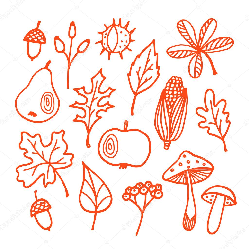 Set of autumn fall elements, various leaves, fruits, vector
