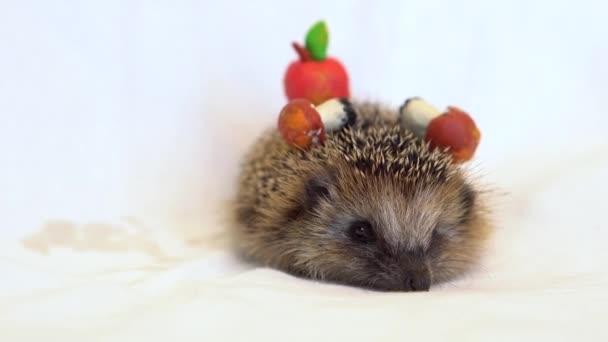 Sündisznó gombával és almával. Játékok és állatok.