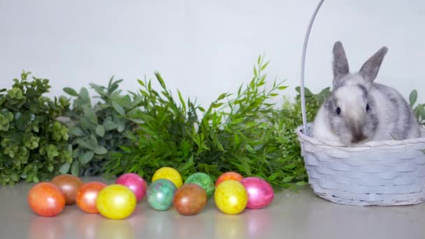 Easter bunny with colored eggs and basket. Festive hare with grass on white wall