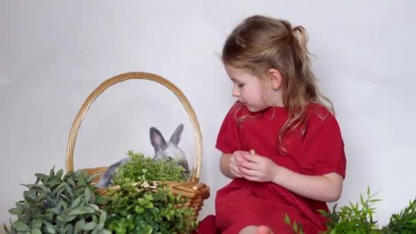 Lány és nyúl kosárban fűvel. Húsvéti játék gyermek és kisállat. Állatok otthon.