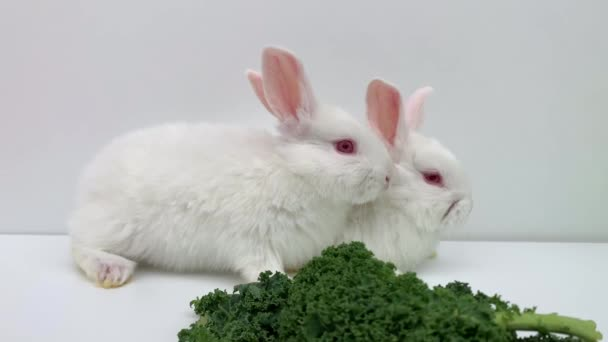 Weiße Kaninchen fressen grünes Gras auf weißem Hintergrund. Zwei Hasen springen zusammen.