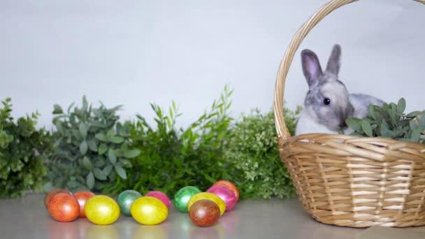 Húsvéti nyuszi színes tojással és kosárral. Ünnepi nyúl fűvel a fehér falon