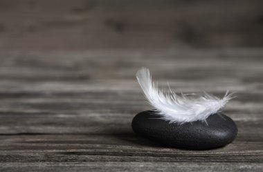 White feather on a black stone: idea for a condolence card.