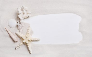 Maritime nautical background or sign with shells and starfish fo