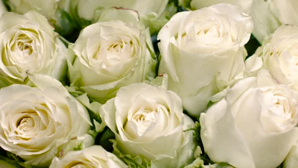 Big Beautiful Buds of White Roses