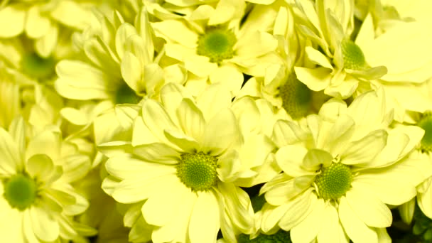 Yellow Chrysanthemum Flowers in a Large Bouquet