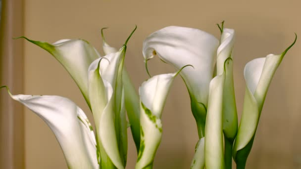 Long Stems in a Bouquet of Calla Flower