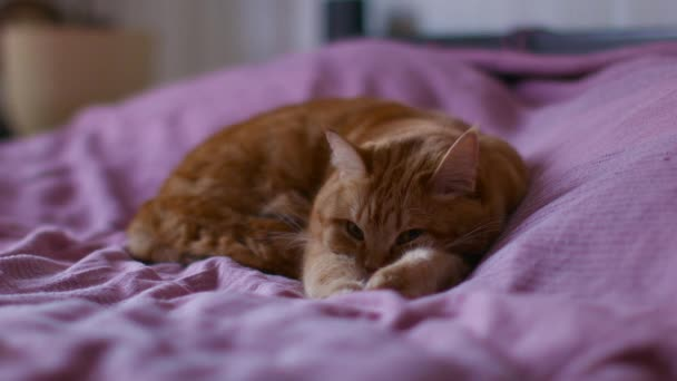 Red Cat Lies on a Bed Pulling Paws