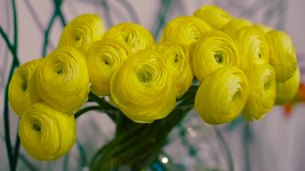 Ranunkulyus Yellow Flowers