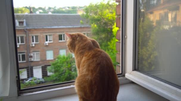 Katze aus dem Fenster schaute