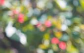 bokeh červený květ a zelený list, rozmazané pozadí