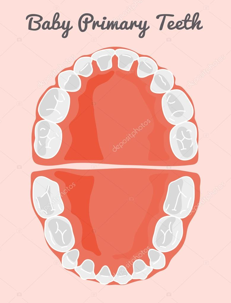 Menschliche Zähne Infographik. Zähne-Infographik — Stockvektor ...
