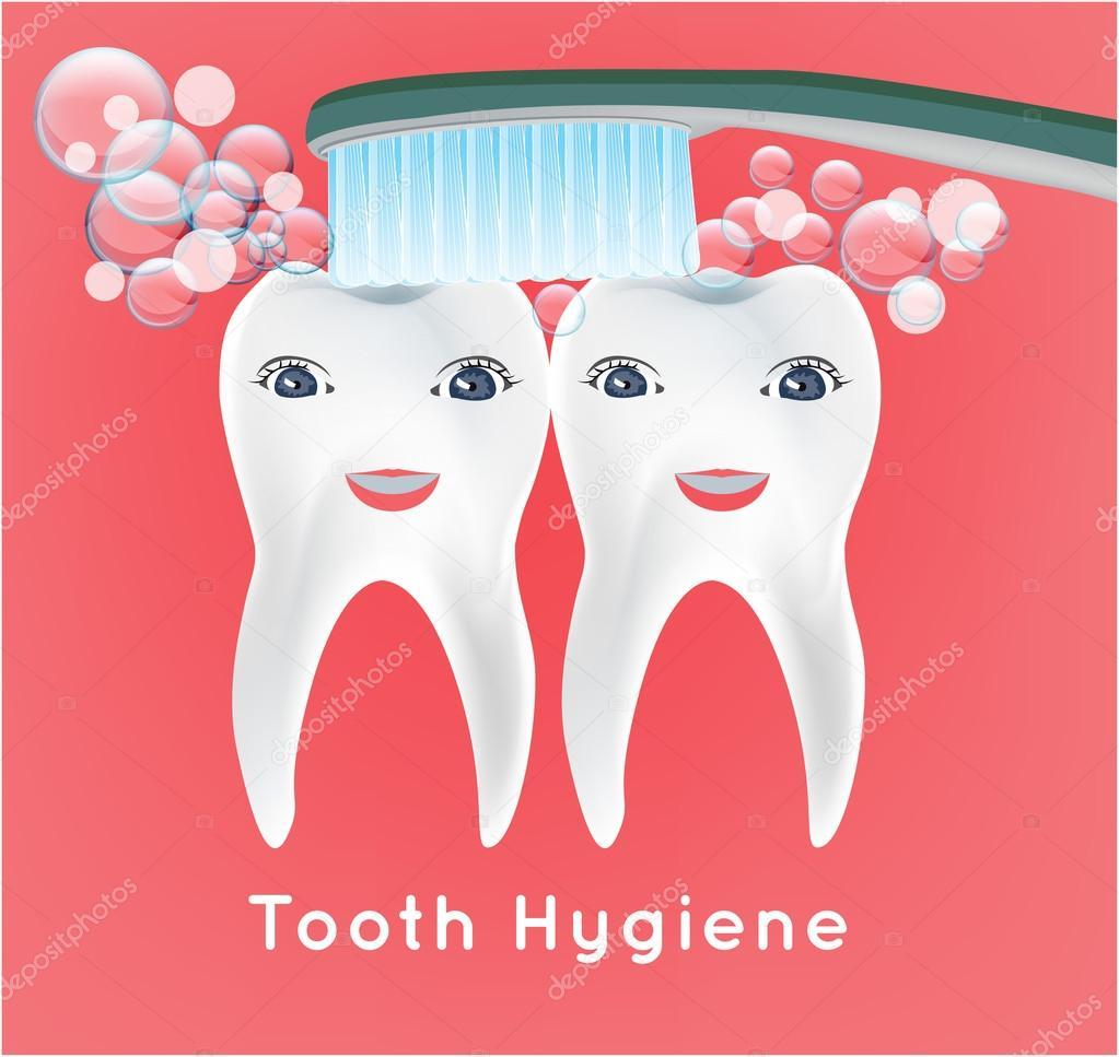 Infografía de los dientes humanos. Primer diente — Vector de stock ...